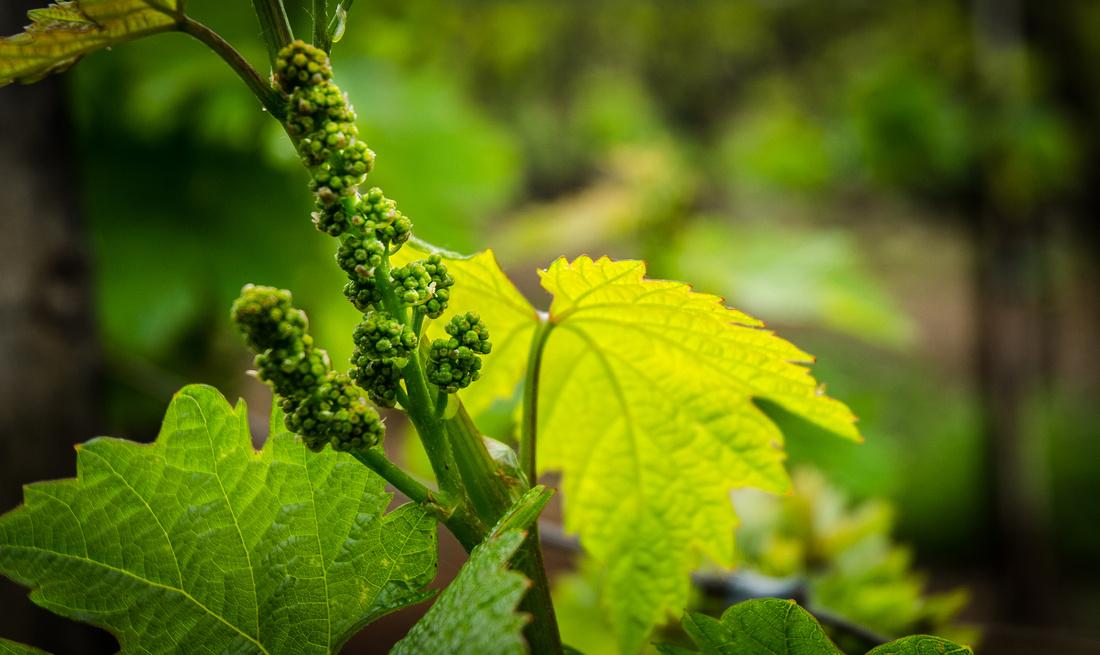 wineries sping passport
